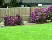 Przesłony - alternatywa dla ogrodzenia drewnianego zdj. 5
