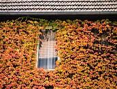 Dom otulony zielenią zdj. 7