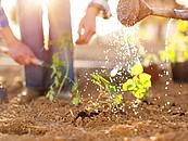 Czego potrzebuje ogród po zimie? zdj. 3