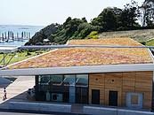 Dachy zielone ekstensywne (z uprawą ekstensywną) –  prawidłowy dobór materiałów zdj. 3