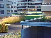 Dachy zielone ekstensywne (z uprawą ekstensywną) –  prawidłowy dobór materiałów zdj. 4