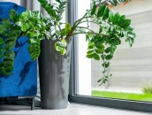 KRISPOL radzi: zadbaj o rośliny w swoim domu zdj. 4