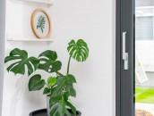 KRISPOL radzi: zadbaj o rośliny w swoim domu zdj. 5