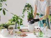 KRISPOL radzi: zadbaj o rośliny w swoim domu zdj. 2