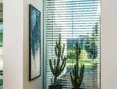 KRISPOL radzi: zadbaj o rośliny w swoim domu zdj. 3