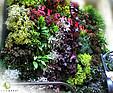 GREENARTE Zewnętrzna zielona ściana na targach Zoo Botanika Wrocław - Greenarte®