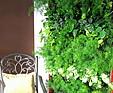 GREENARTE Ekspozycja zielonych ścian w biurze firmy Greenarte®