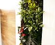 GREENARTE Zielona ściana w domu prywatnym