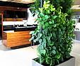 GREENARTE Dwustronna mobilna zielona ściana w salonie meblowym firmy Halupczok - Greenarte®