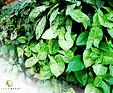 GREENARTE Zielona ściana w domu prywatnym w Rybniku