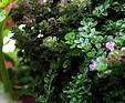 GREENARTE Detal zewnętrznej zielonej ściany - Greenarte®