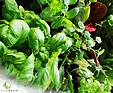 GREENARTE Bukiet ziół w systemie zielonej ściany