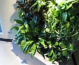 GREENARTE Zielona ściana w biurze firmy Euro Project w Zielonej Górze