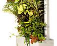 GREENARTE Mobilna zielona ściana w formie obrazu - Greenarte®