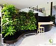 GREENARTE Centrum Squasha Redeco