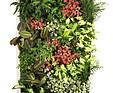 GREENARTE Standardowa mobilna zielona ściana Greenarte®