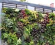 Zewnętrzna zielona ściana w ogrodzie prywatnym
