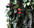 GREENARTE – Roślinne ściany